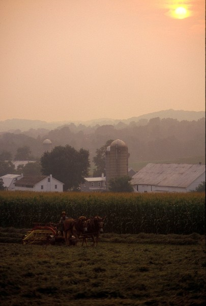 Amish Country In Morning Mist