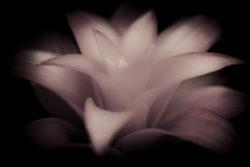 White Bromeliad