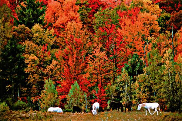 horizontal fall horses