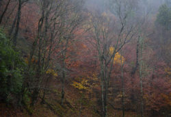 Smokies, Fall foliage